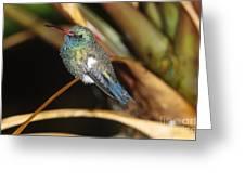 Broad-billed Hummingbird Greeting Card