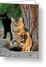 Cats In Hydra Island Greeting Card