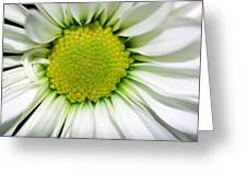 Flower Closeup Greeting Card