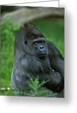 Gorille De Plaine Gorilla Gorilla Greeting Card