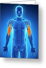 Human Arm Muscles Greeting Card