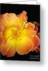 Joseph's Coat Rose Greeting Card
