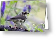 Northern Waterthrush Greeting Card