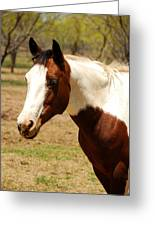 Paint Mare Greeting Card