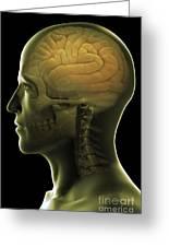 The Human Brain Greeting Card