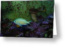 Tropical Fish And Coral Greeting Card
