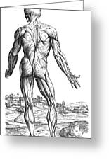 Vesalius: Muscles, 1543 Greeting Card