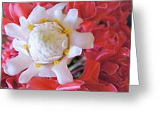Flower For You  Greeting Card by Gornganogphatchara Kalapun
