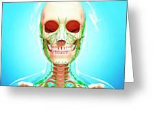 Female Lymphatic System Greeting Card