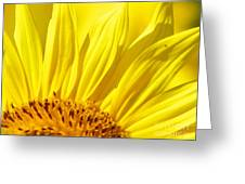 #923 D718 You Are My Sunshine. Sunflower On Colby Farm Greeting Card
