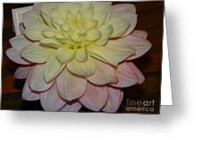 #928 D809 Dahlia Pink White Yellow Dahlia Thoughts Of You Greeting Card