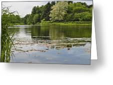 Pond With Trees  Greeting Card
