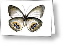 95 Palmfly Butterfly Greeting Card by Amy Kirkpatrick