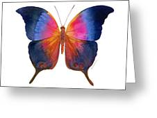 96 Brushfoot Butterfly Greeting Card by Amy Kirkpatrick