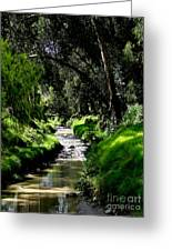 A Babbling Brook Greeting Card by Al Bourassa