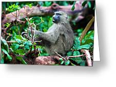 A Baboon In African Bush Greeting Card