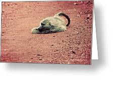 A Baboon On African Road Greeting Card