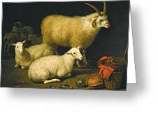 A Barn Interior With A Four-horned Ram And Four Ewes And A Goat Greeting Card