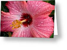 A Bathing Hibiscus Greeting Card