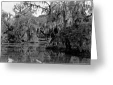 A Bayou Scene In Louisiana Greeting Card