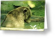 A Bear Bath Greeting Card
