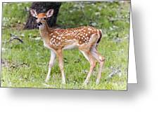 A Beautiful Fawn Greeting Card