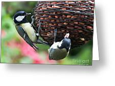 A Beautiful Pair Of Tits Greeting Card