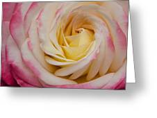 A Beautiful Pink Rose In Summertime Greeting Card