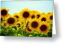 A Beautiful Sunflower Field Greeting Card