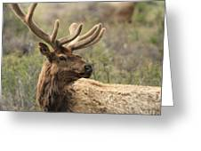 A Beautiful Young Rack Greeting Card