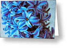 A Beauty In Blue Greeting Card by Hannes Cmarits