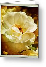 A Bee And Rose Greeting Card