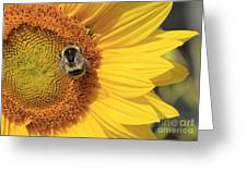 A Bee Gathering Pollen On A Sun Flower Greeting Card