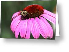 A Bee On The Highline Greeting Card