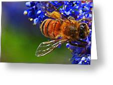 A Bee's Life Greeting Card