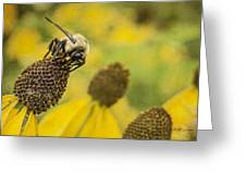 A Bee's Paradise Greeting Card by Jeff Swanson