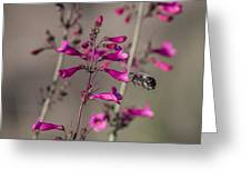 A Bee's View Greeting Card