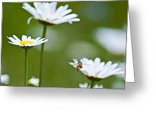 A Bee's World Greeting Card