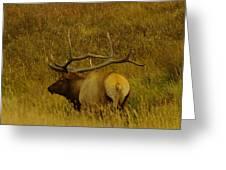 A Big Bull Elk Greeting Card