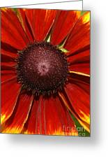 A Big Orange And Yellow Flower Greeting Card