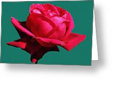 A Big Red Rose Greeting Card