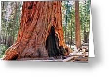 A Big Tree Greeting Card