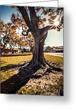 A Big  Tree Trunk Of Long Beach In The Autumn Greeting Card