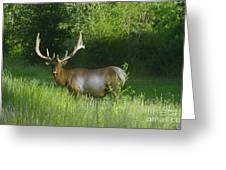A Big Wide Rack  Greeting Card