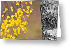 A Birch At The Lake Greeting Card