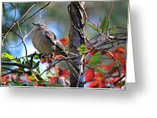 A Bird Enjoying The View Greeting Card