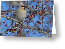 A Bird For Its Crest.. Greeting Card