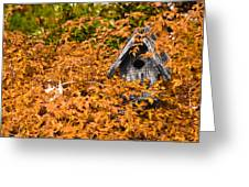 A Bird House Sits Empty In Fall Greeting Card
