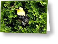 A Bird In The Bush Greeting Card