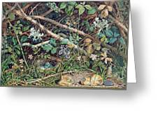 A Birds Nest Among Brambles Greeting Card